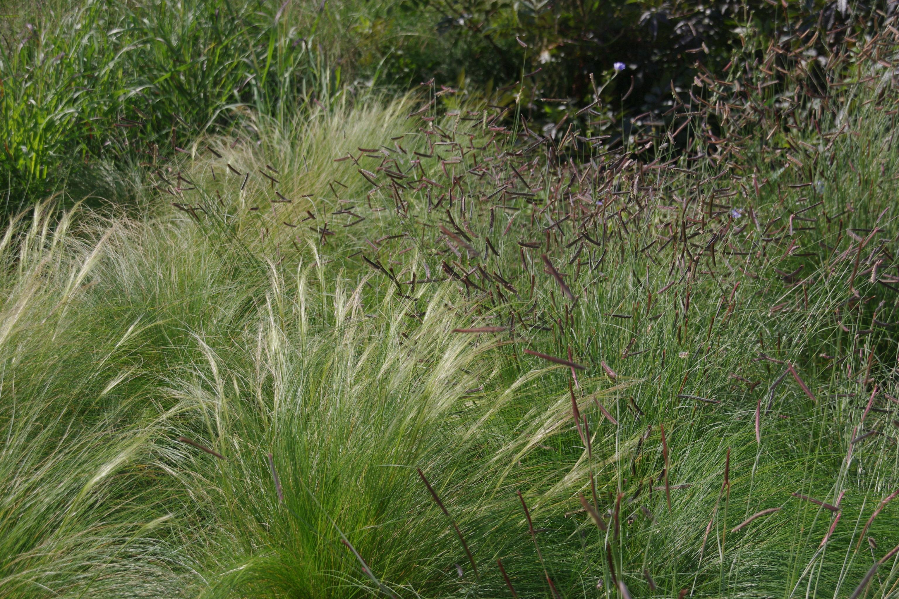 grassen op de A2