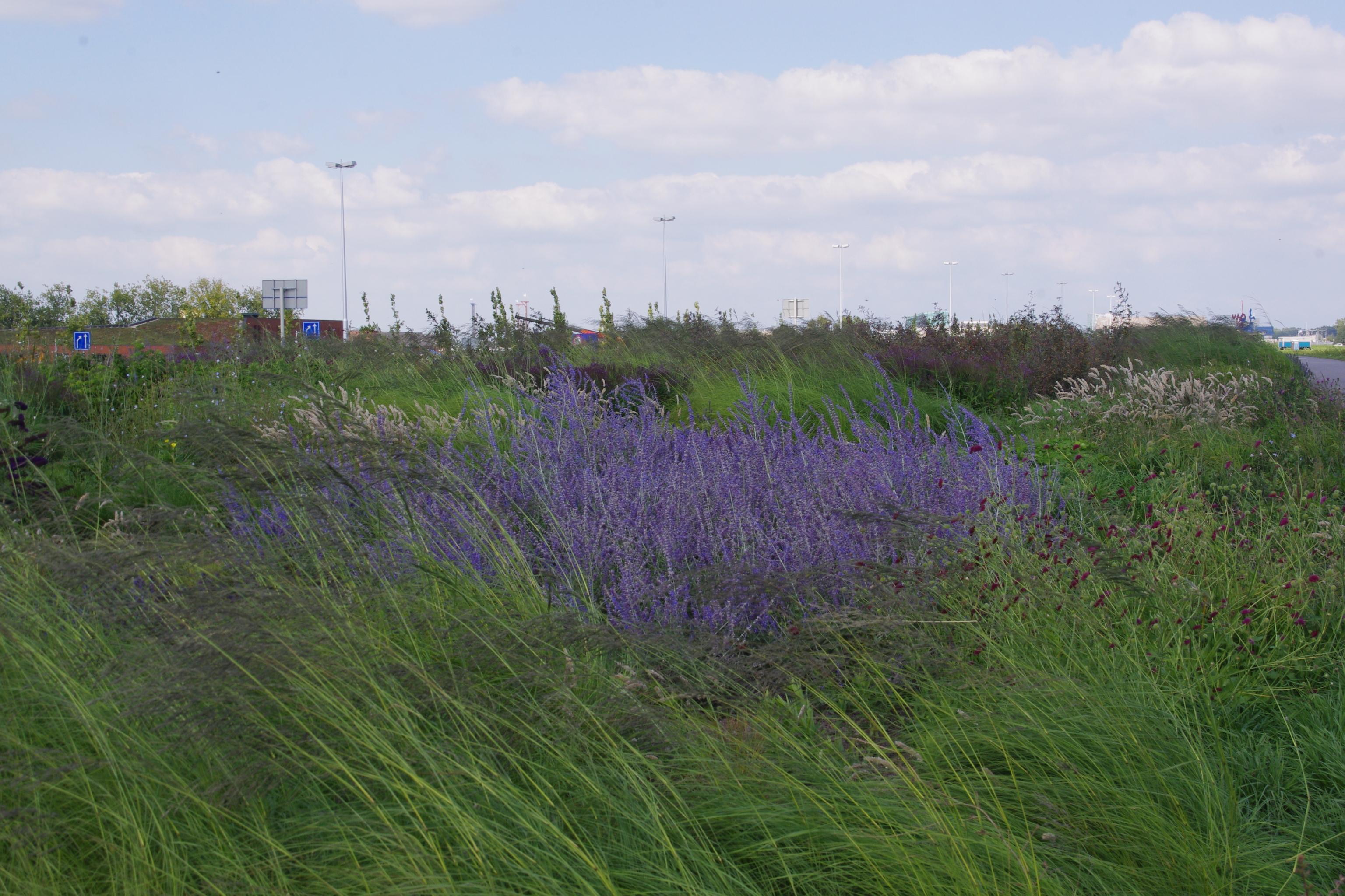 Willem Alexanderpark A2 aan het eind van de zomer